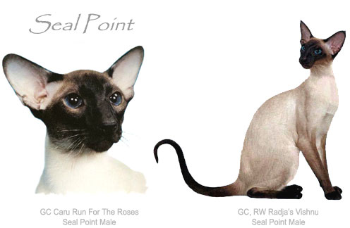 National Siamese Cat Club
